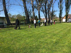 Skupinový výcvik psov s majiteľmi